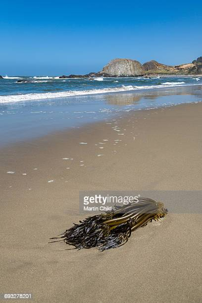 Seaweed in Seal Rock State Park