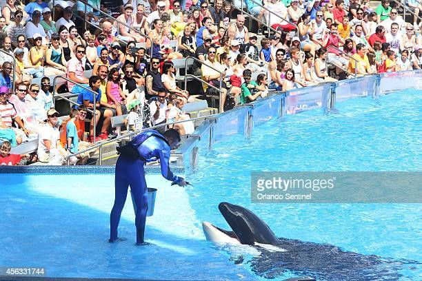 SeaWorld is heavily emphasizing conservation amid controversy over its killer whales and it is not alone Some aquariums around North America have...
