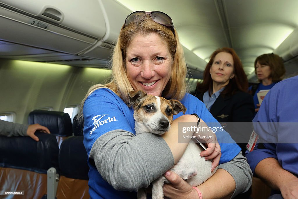 SeaWorld Rescue team member Anita Yeattes poses with a rescue dog. Sixty orphaned dogs and cats are being flown across the country from Newark Liberty International Airport on November 17, 2012 in Newark, New Jersey to make room for thousands of animals who need shelter as a result of Hurricane Sandy. SeaWorld's animal rescue team assists in the transport, which takes place aboard a donated Southwest Airlines flight. The pets are flying to the Helen Woodward Animal Center in San Diego, California, where they will be placed in loving homes with adoptive families.