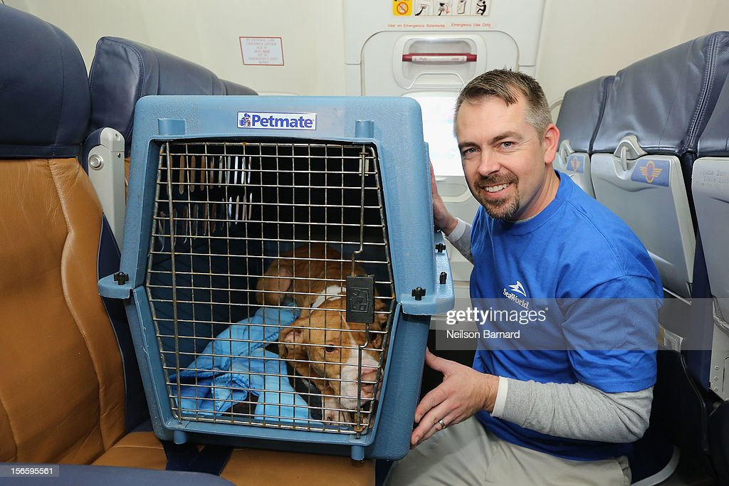 SeaWorld Rescue team member Jay Tacey assists a rescue dog onboard the Southwest Airlines flight. Sixty orphaned dogs and cats are being flown across the country from Newark Liberty International Airport on November 17, 2012 in Newark, New Jersey to make room for thousands of animals who need shelter as a result of Hurricane Sandy. SeaWorld's animal rescue team assists in the transport, which takes place aboard a donated Southwest Airlines flight. The pets are flying to the Helen Woodward Animal Center in San Diego, California, where they will be placed in loving homes with adoptive families.