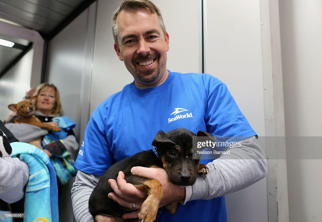 SeaWorld Rescue team member Jay Tacey helps a rescue dog board the Southwest Airlines flight. Sixty orphaned dogs and cats are being flown across the country from Newark Liberty International Airport on November 17, 2012 in Newark, New Jersey to make room for thousands of animals who need shelter as a result of Hurricane Sandy. SeaWorld's animal rescue team assists in the transport, which takes place aboard a donated Southwest Airlines flight. The pets are flying to the Helen Woodward Animal Center in San Diego, California, where they will be placed in loving homes with adoptive families.