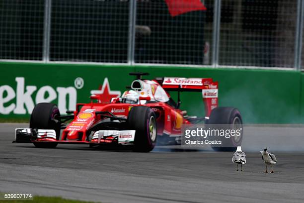 Sebastian Vettel of Germany driving the Scuderia Ferrari SF16H Ferrari 059/5 turbo past a pair of seagulls on the track during the Canadian Formula...