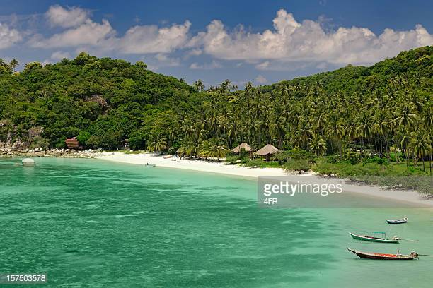 Secluded Paradise Tropical Beach with many Palm Trees (XXXL)
