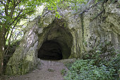 Enter the cave in the woods