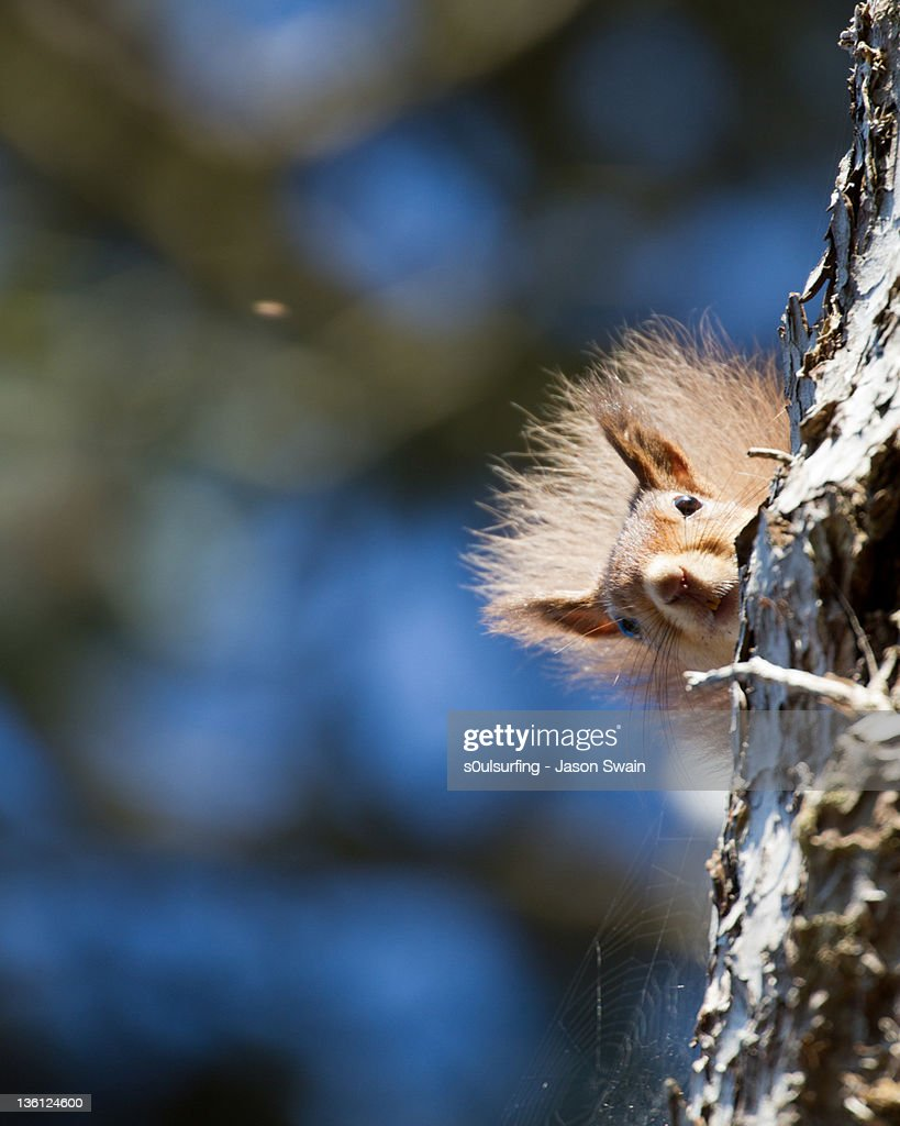 Secret squirrel with bokeh background
