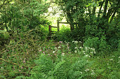 Stile and walking route almost hidden amongst trees, vegetation and flowers with bright landscape beyond.