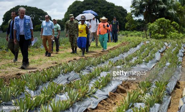 UN SecretaryGeneral's Special Representative for Colombia and Head of the UN Mission to Colombia Jean Arnault visits a pineapple cultivation at an...