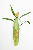 Section missing from husk on corn cob