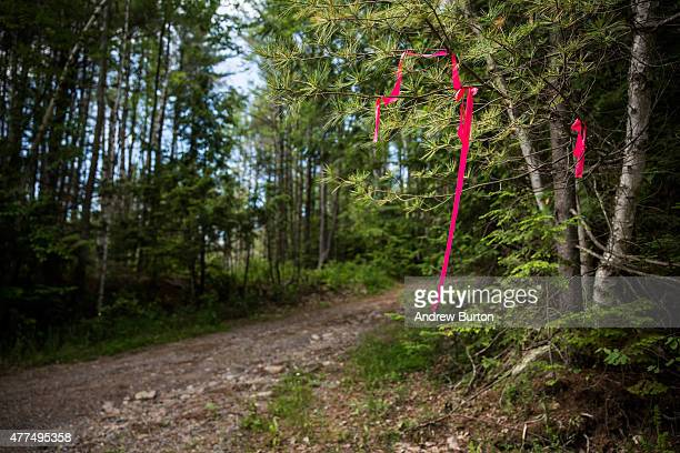 A section of land previously closed due to an ongoing manhunt for two escaped convicts is seen after officials decided to change strategies and...