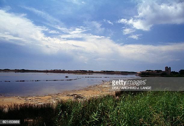 A section of marshland near Porto Cesareo Apulia Italy