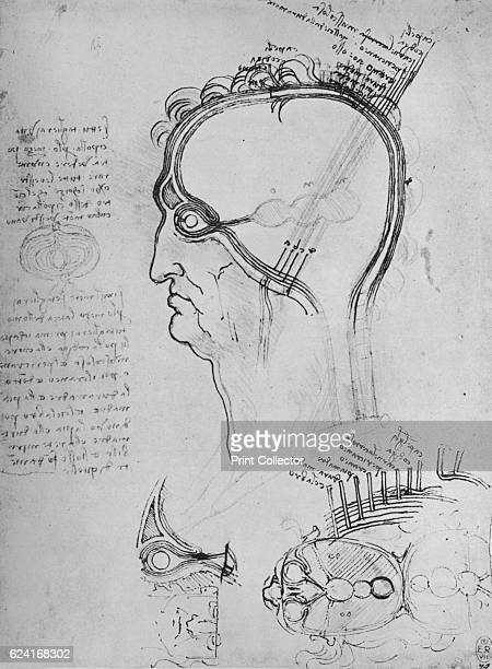 Sections of a Man's Head Showing the Anatomy of the Eye Etc' c1480 From The Drawings of Leonardo da Vinci [Reynal Hitchcock New York 1945] Artist...