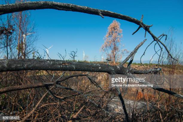 A secular forest property of Adolfo Gustavo Berlingieri and his family is burnt because of the fires that are hitting the area of the province on...