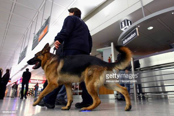 Security personal controls with a sniffer dog the terminal 2 of Munich airport on January 20 2010 in Munich Germany A man broke through the security...