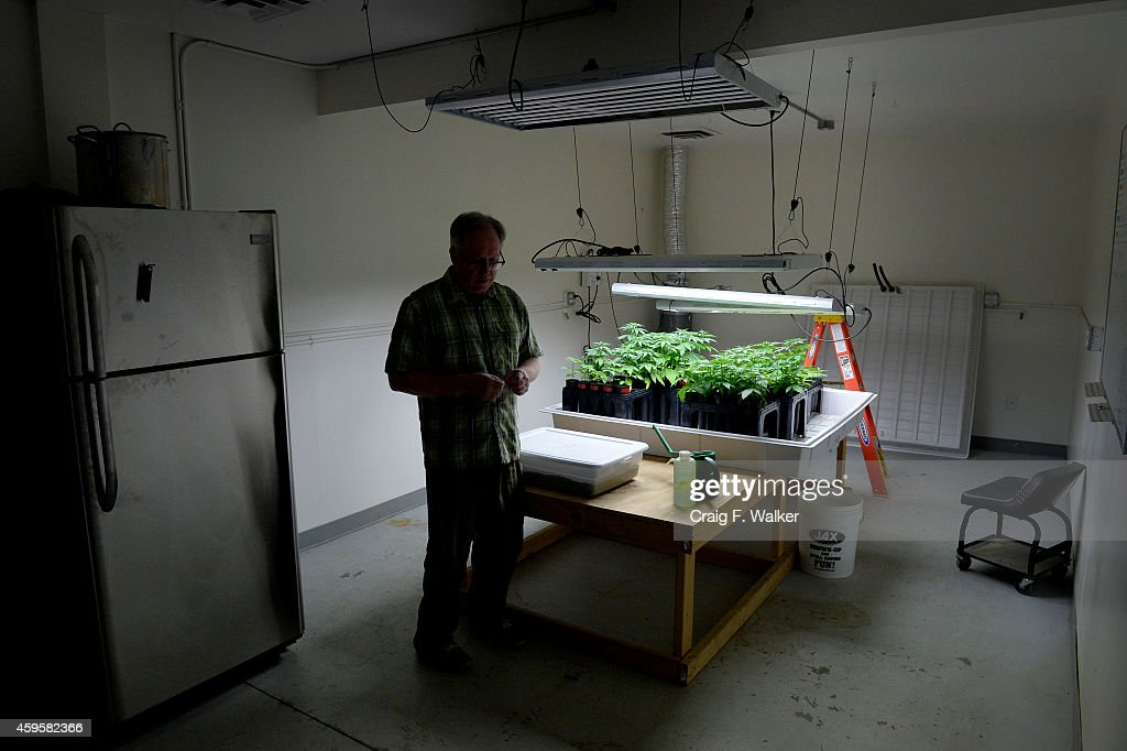 Seed developer Ben Holmes grows Otto II, a high-cannabinoid strain of hemp he hopes to patent in the coming year, and unclassifiable hybrids at his Centennial Seeds lab in Lafayette, CO November 25, 2014.