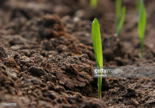 Seed sprouting from fresh earth