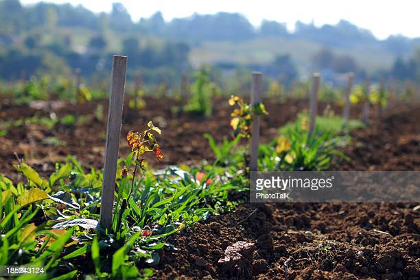 Seeding Time - XLarge
