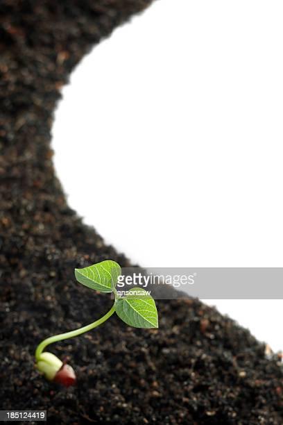 seedling and soil
