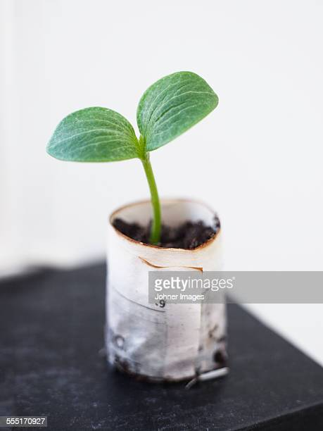 Seedling, close-up