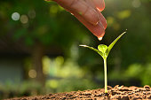 Seedling concept by human hand watering young tree over green background