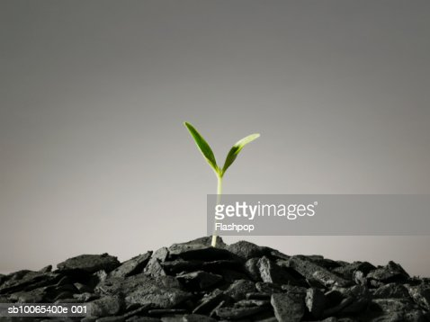 Seedling growing in pile of coal
