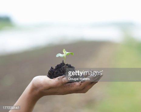 Seedling in palm of hand. : Foto de stock