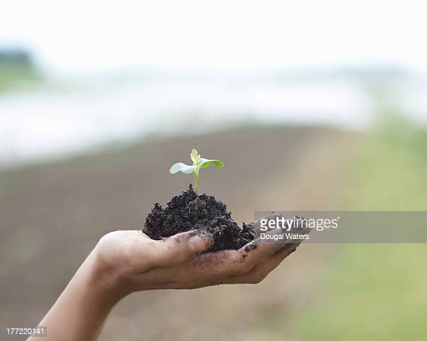 Seedling in palm of hand.