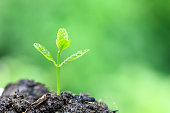 Seedlings are grown from the ground on natural green background, Growing plants concept