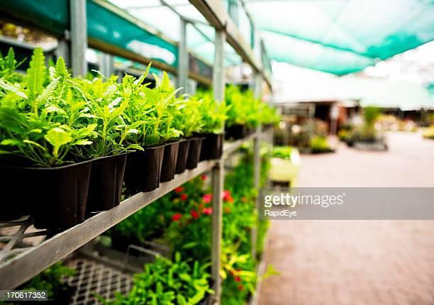Seedlings at garden center