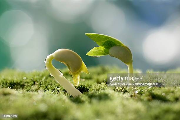 Seedlings, close up