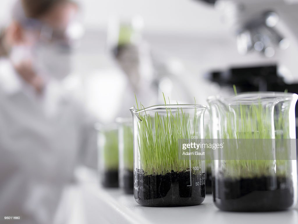 Seedlings growing in beakers : Stock Photo