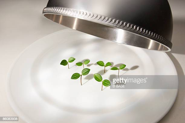 seedlings on the plate
