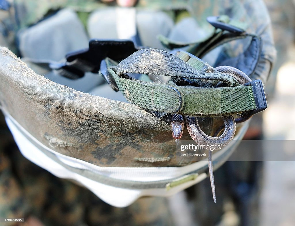 Seen is a snake that was found inside a Marines kevlar helmet during a live fire excercise on July 31, 2013 near Rockhampton, Australia. Over 30,000 US and Australian troops are participating in Talisman Sabre, a biennial excercise that enhances multicultural collabration between U.S and Australian forces for future combined operations, humanitarian assistance and natural disaster response.