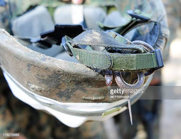 Seen is a snake that was found inside a Marines kevlar helmet during a live fire excercise on July 31 2013 near Rockhampton Australia Over 30000 US...