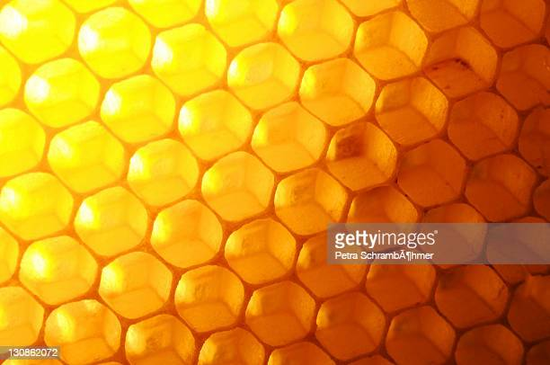 Seeping honeycomb, backlight