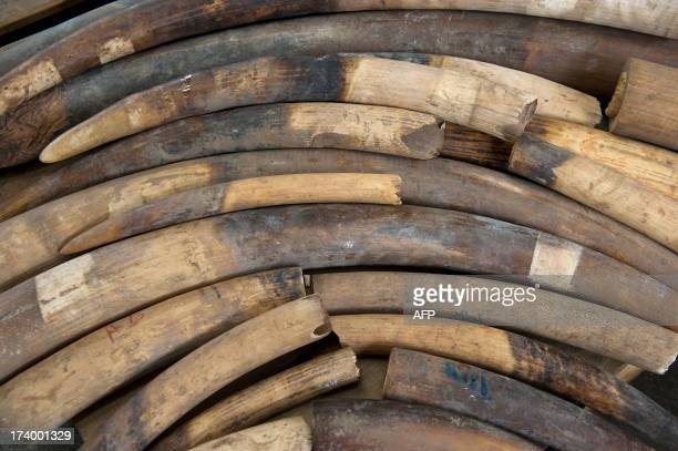 Seized ivory tusks are displayed during a Hong Kong Customs press conference on July 19 2014 More than 1000 ivory tusks mainly from baby elephants...