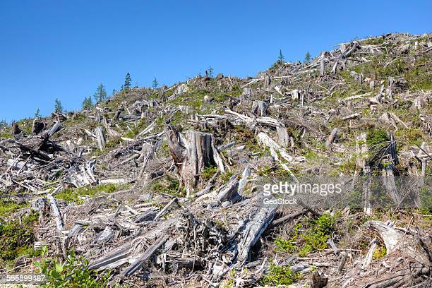 Select clear-cut deforestation