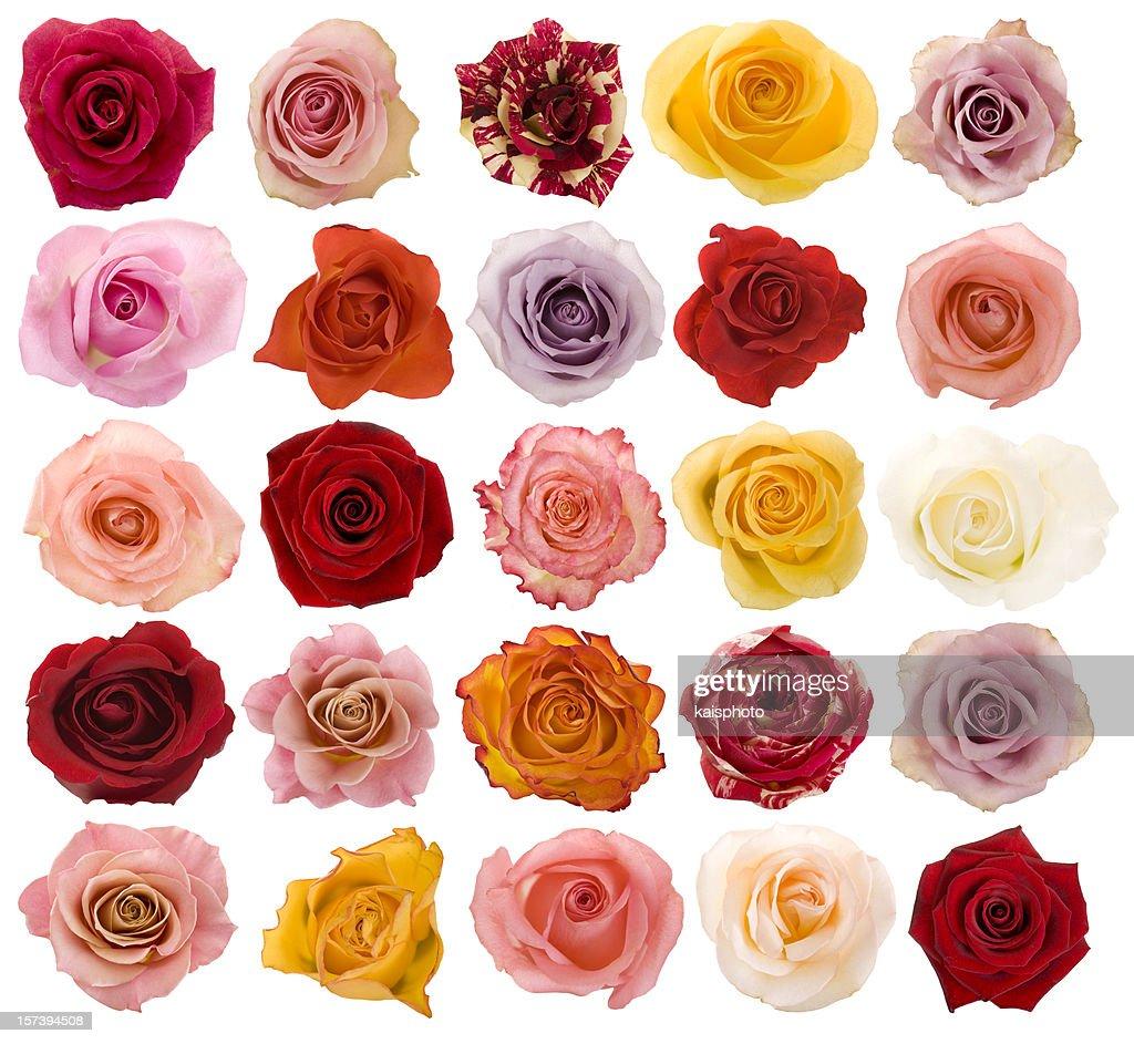 Auswahl an schönen Rosen : Stock-Foto