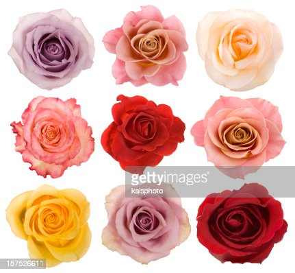 Selection of beautiful roses