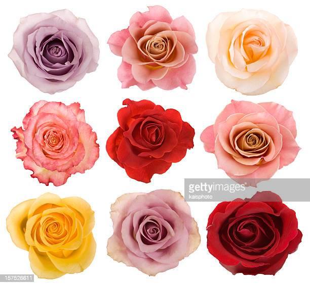 Auswahl an schönen Rosen