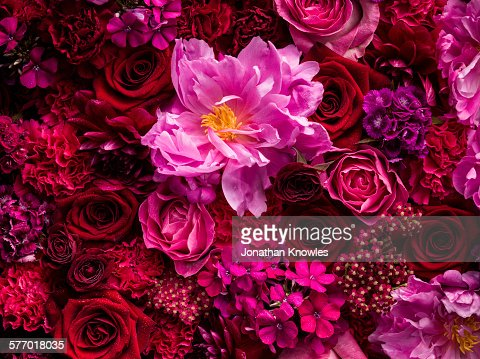 Selection of cut flowers in pink and red