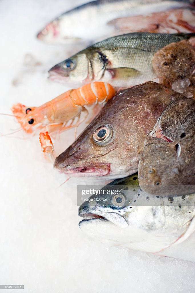 A selection of fish on ice : Stock Photo