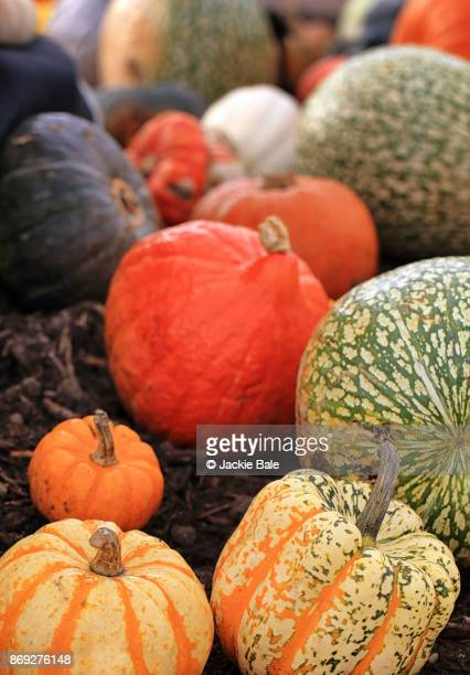 A selection of pumpkins and gourds