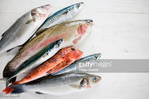 A selection of raw fish : Stock Photo