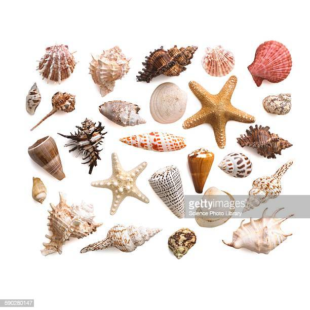 Selection of sea shells and star fish