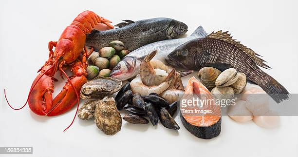Selection of seafood, studio shot
