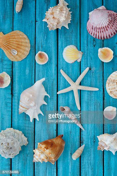 Selection of seashells and a starfish