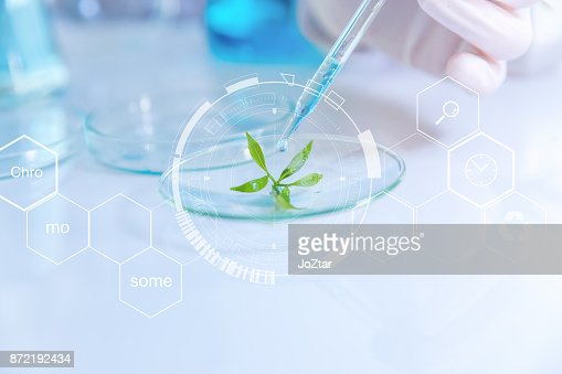 selective focus a small organic plant, Beauty background, scientist is sampling a chemical extract from organic natural, research and develop background, : Stock Photo