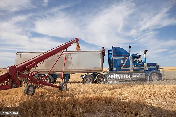 A selfpropelled shaftdriven auger loading a bin with grain Near Penong Nullarbor Plain South Australia Australia