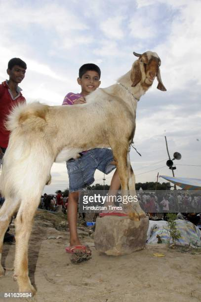 Selling and buying of goats at old city for the festival of Bakri Eid on September 1 2017 in Lucknow India Muslims across the world are preparing to...