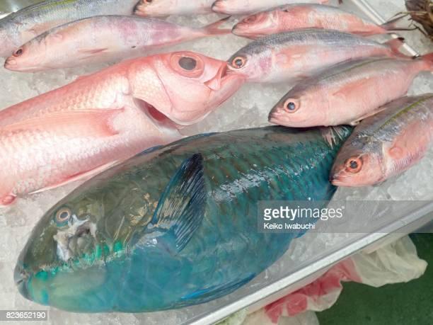 Selling tropical fish in Okinawa, Japan